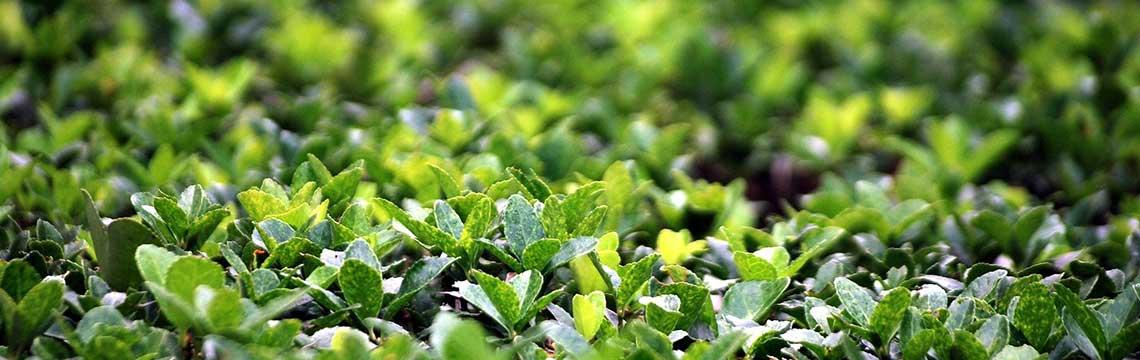 Gartenpflanzen-Arten